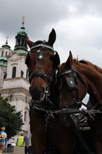 horse1.jpg
